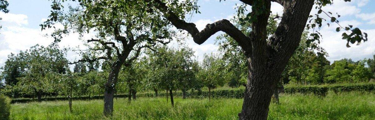 boomgaard-van-12.jpg