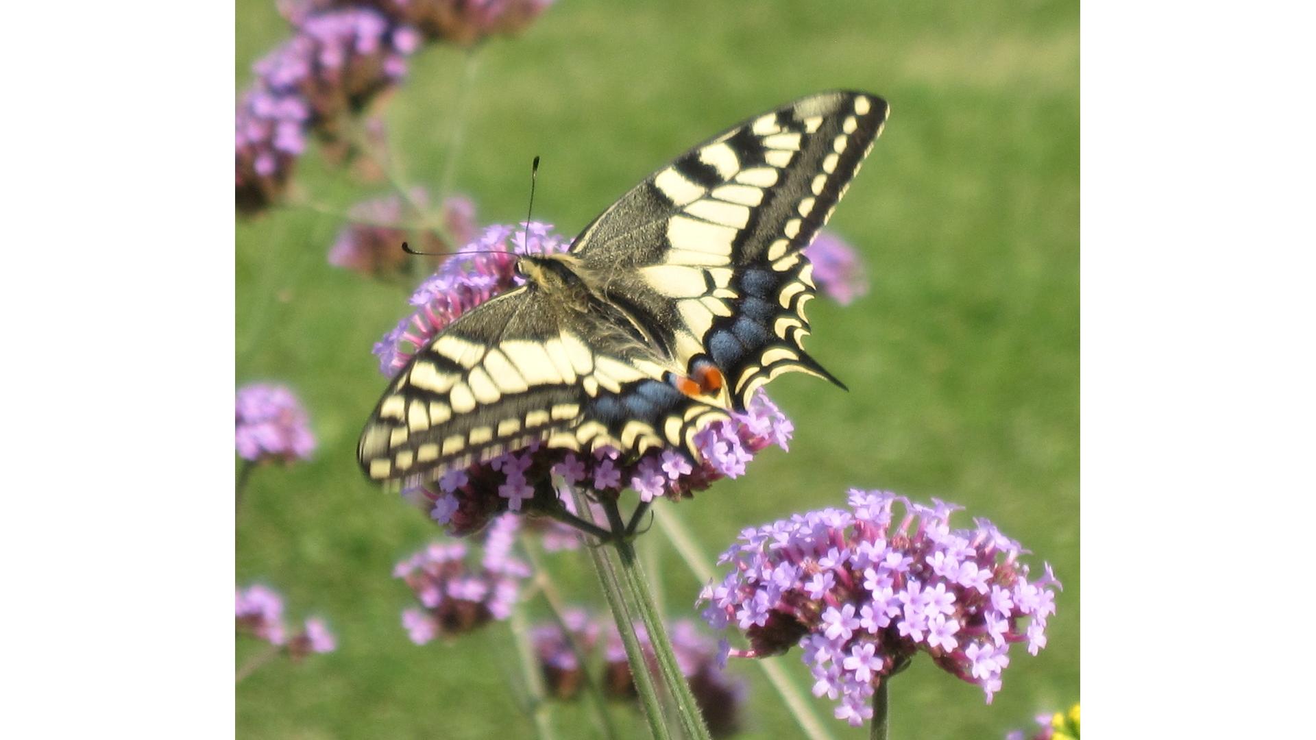 Eetbaar IJsselstein, Hooghe Camp tuin, tuinieren, natuur, IJsselstein, ontmoeten, terras, vlinders