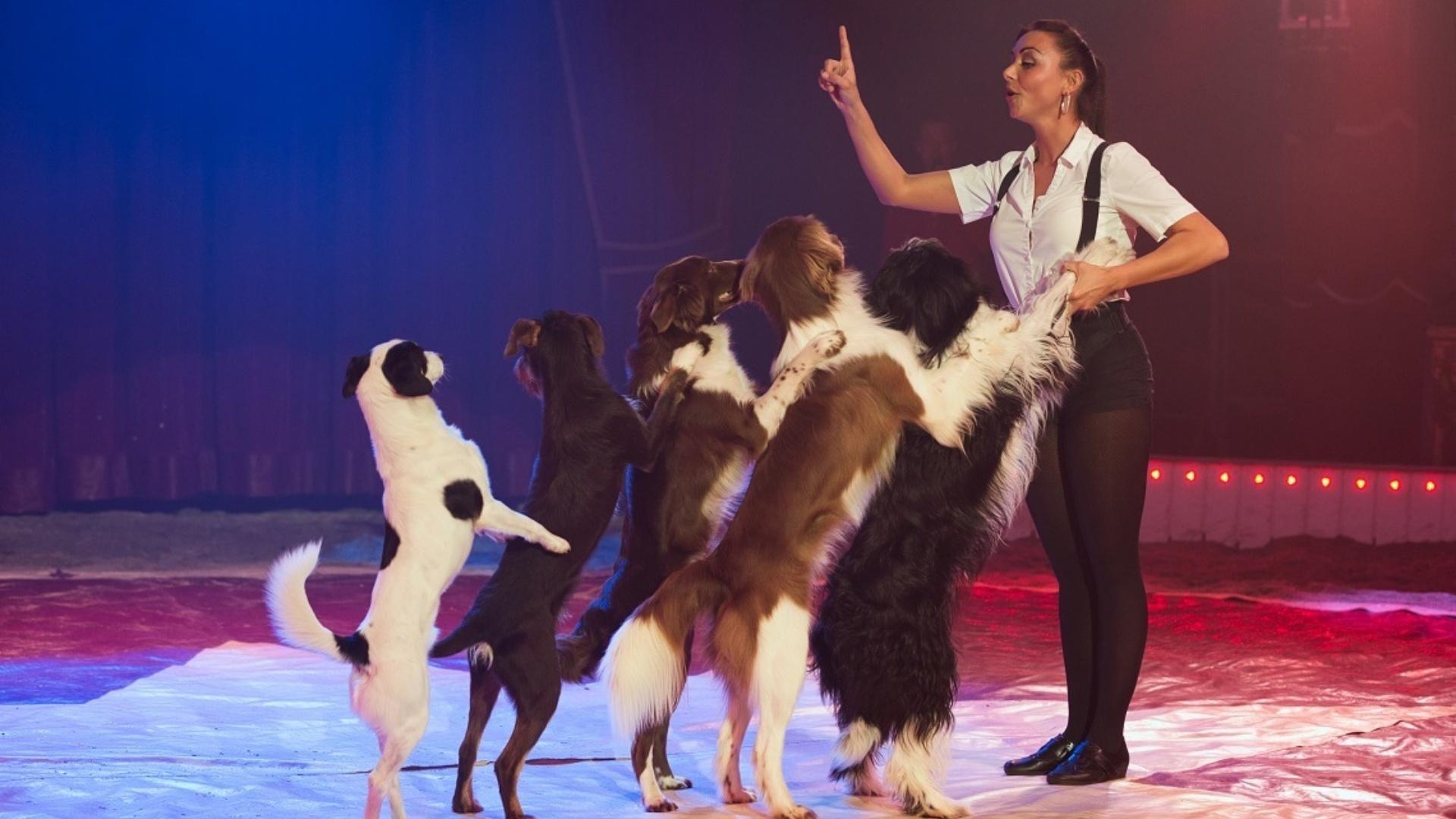 Circus Maximum honden Nadja Scholl