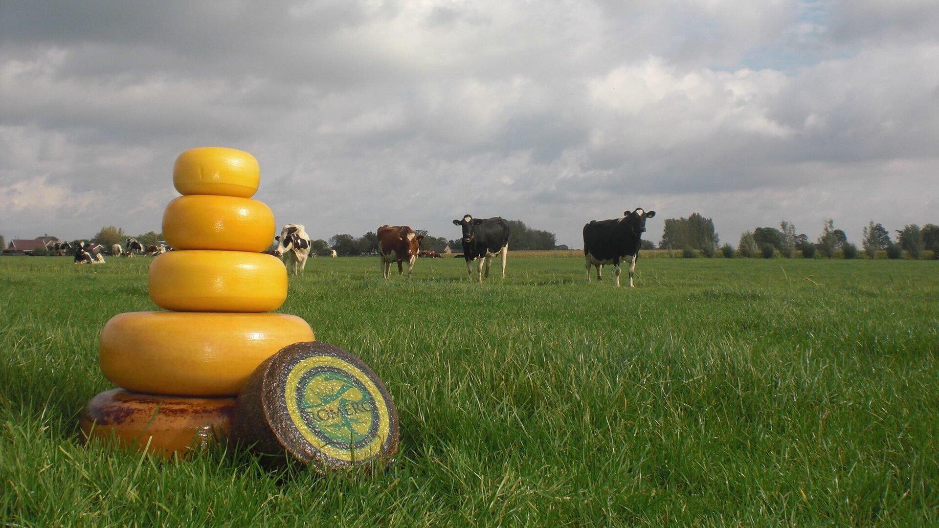 kaasboerderij-elisabethhoeve-2.jpg