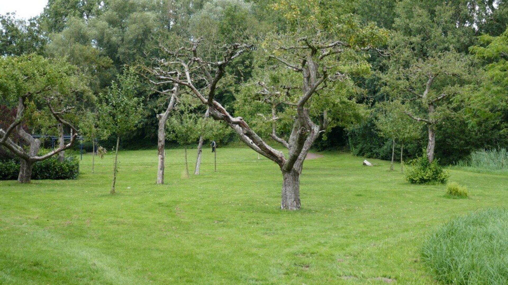 oudste-boomgaard-van-ijsselstein.jpg